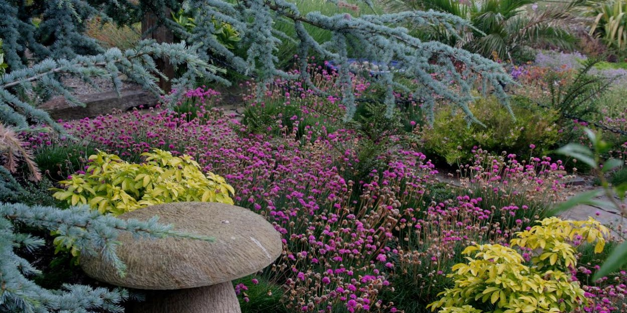 front garden mushroom