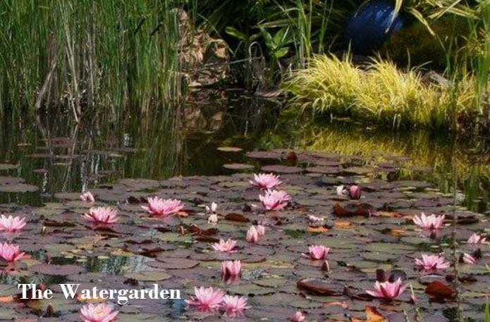 watergarden t